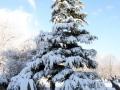 snow_10_3